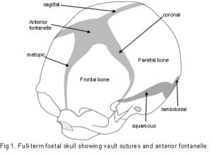 Cranial Vault Tensegrity In Biology The correlation between cranial base and jaw base tends to be closer in skeletal class iii cases. tensegrity in biology