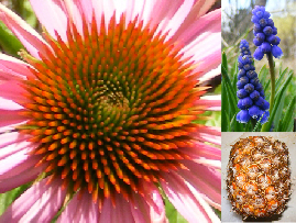 plant_helix